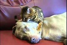 Cat's massage / koty masują :-)