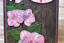 Carte Orchidee