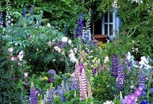 Garden - purples