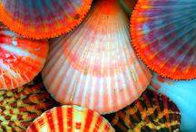 Shells-Treasures of God!!