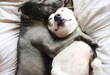 Animal in Love / So cute animals. Love is in the air. ❤️ (Family-Mom-Children-Parnts-hug-kiss-feeling-littlemoments)