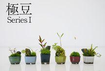 Saksı-bitki