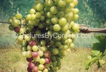 Cool stock photos / These are my own stock photos from my royalty-free photo library: http://PicturesByCornelia.com