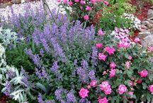 Garden & bahçe