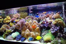 Marine Science / by Laurie Callihan