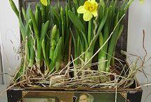 Рита весна