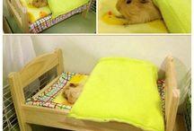 Guinea pig cage gear.