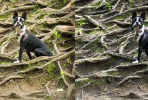 photo de chiens