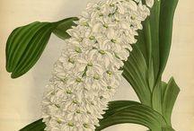 unique flowering
