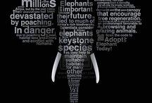 Elephants ESDGC
