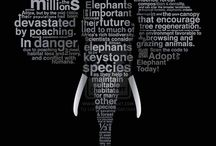 2015 Elephants / by Jackson Hole Wildlife Film Festival