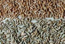 Cover Crops / Great garden cover crops for every season