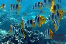 Activities! Snorkeling / Underwater images from snorkeling