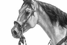 Ló rajz