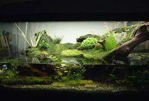 Aquaterrarium
