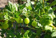 Garden Love - tips & tricks / DIY, planting, growing, landscaping