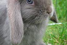 o coelho que vou comprar pra princesa