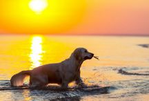Pets Welcome! / Why not bring the WHOLE family. See our selection of pet friendly vacation rentals in northern Michigan!