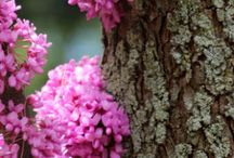 Plants We Love / Our favorite trees, shrubs, flowers and more!