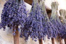 Lavender / by Joyce Hughes