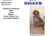 find digger missing dog