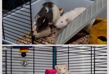 DIY Rodent Treats