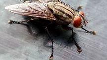 receita eliminar insetos