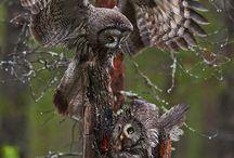 Owls / by Larry Ussery