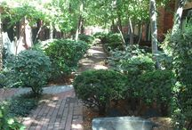 Beautiful Courtyards / Landscape design for long, narrow spaces can be a challenge. Plant selection and placement is crucial to create a visually attractive space that includes privacy and functionality.