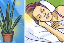 Plantas para el insomnio