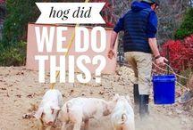 Folly Farms Blog