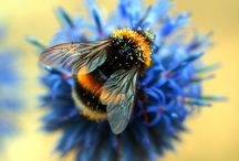 Bee Photography