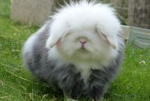 Ultimate cuteness! <3 / Too cute animals ❤️