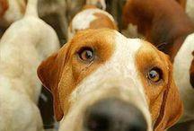Σκυλακια!!!