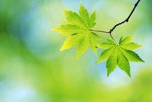 Leaves / by Jennifer Sandberg