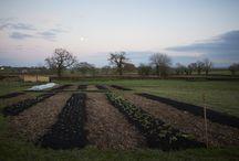 Birth of a flower Farm - Electric Daisy Flower Farm - Bath, Somerset / Growing a flower farm from scratch. The birth of our new flower farm near Bath, Somerset. We grow British Flowers for weddings, events and exhibitions.