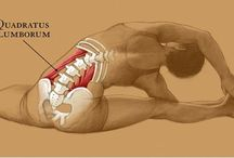lower back health
