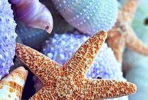 shells, beach & sea
