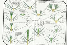 bonsai formowanie
