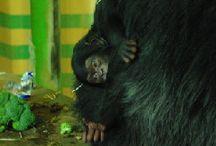 Touroparc Zoo / L'actualité en images sur Touroparc Zoo (France)