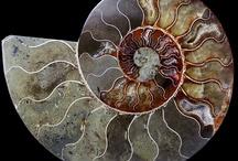 Stones, Minerals & Fossils / by Cindy Lee Jones