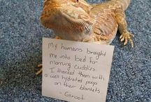 Everything bearded dragons