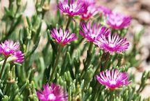 sun flower beds / by Bridgett McGee