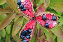 FLOWERS-FRUITS-SEEDS-PODS-PLANTS-FUNGI