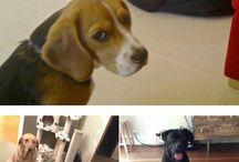 Cuccioli e cagnolini♥️♥️♥️♥️♥️♥️