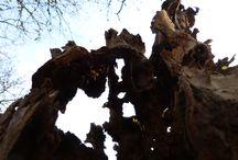 Trees , Wood / Photo from Dietrich Weisenborn