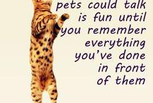 Animals / because we at Aneis De Vida love them