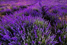the color purple / my favorite color...soothing and regal...  / by Karen Howell
