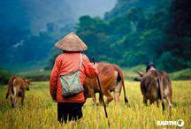 Laos / L'Asia colpisce, impressiona e ti riscalda. In un turbinio di luci, suoni e profumi indelebili, il caos delle metropoli acquisisce, con sorprendente semplicità, un proprio ordine. Come in un complicato puzzle, culture millenarie, spiritualità, tradizioni religiose, paesaggi naturali incontaminati e il marcato senso di accoglienza che contraddistingue questi popoli, si incastrano alla perfezione