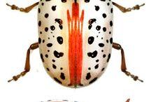 Biller og insekter